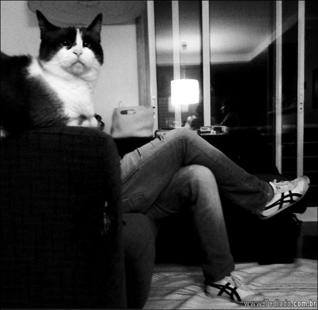 foto-de-gato-tirado-no-momento-certo-18