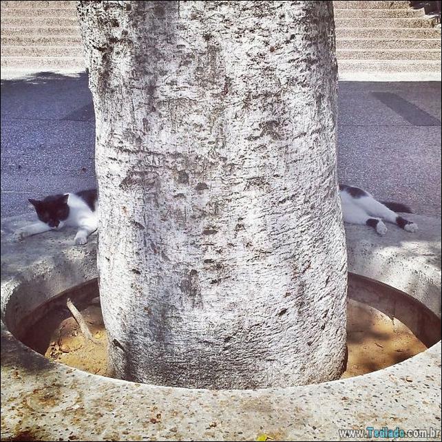 foto-de-gato-tirado-no-momento-certo-19