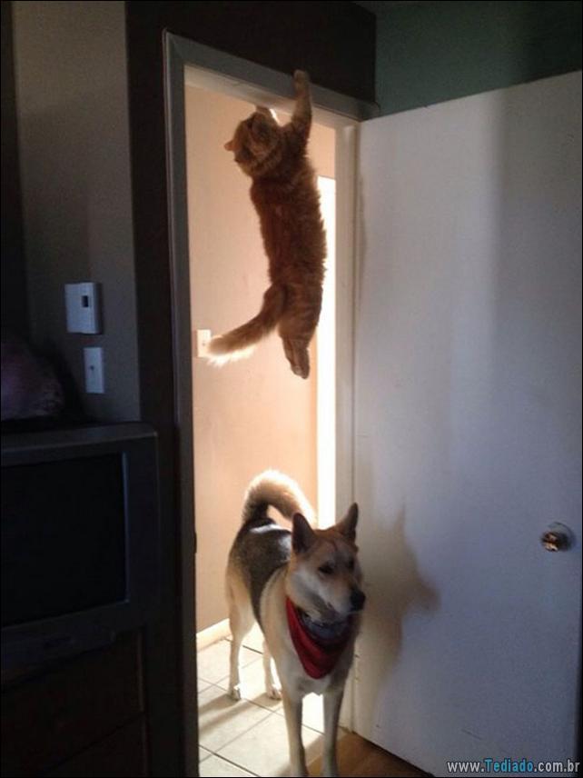 foto-de-gato-tirado-no-momento-certo-21