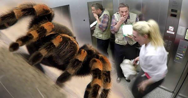 Pegadinha da aranha no elevador 5