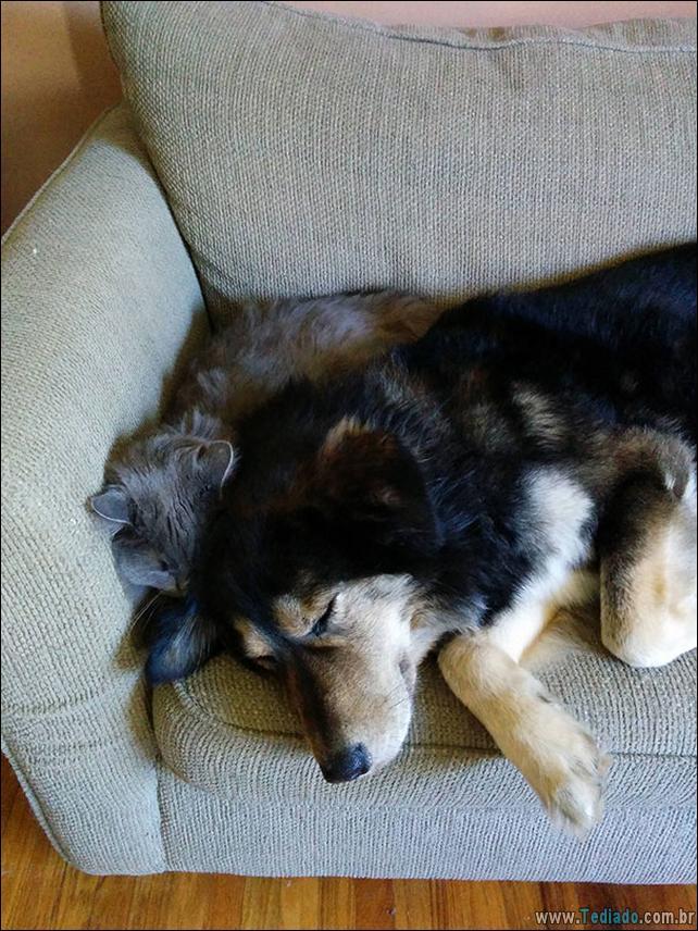 cachorros-que-nao-liga-para-seu-espaco-07