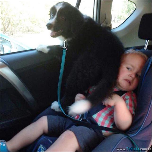 cachorros-que-nao-liga-para-seu-espaco-12