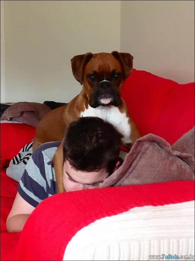 cachorros-que-nao-liga-para-seu-espaco-16
