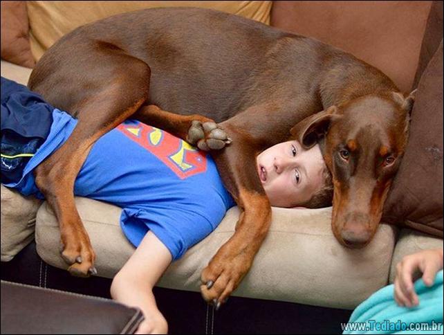 cachorros-que-nao-liga-para-seu-espaco-22