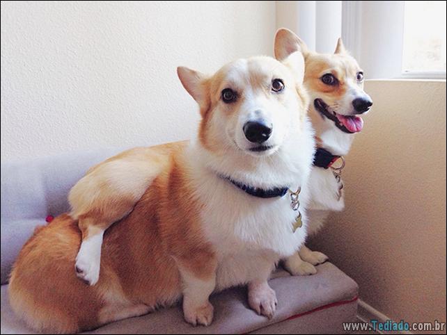 cachorros-que-nao-liga-para-seu-espaco-24