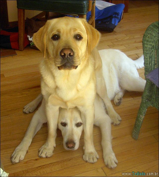 cachorros-que-nao-liga-para-seu-espaco-26