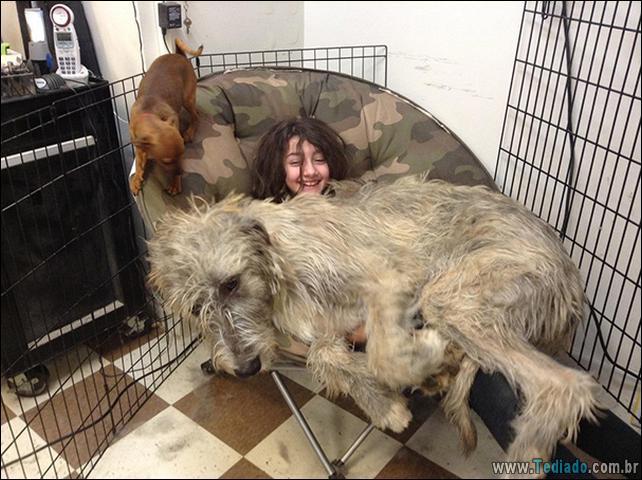 cachorros-que-nao-liga-para-seu-espaco-28
