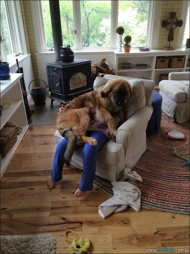 cachorros-que-nao-liga-para-seu-espaco-29