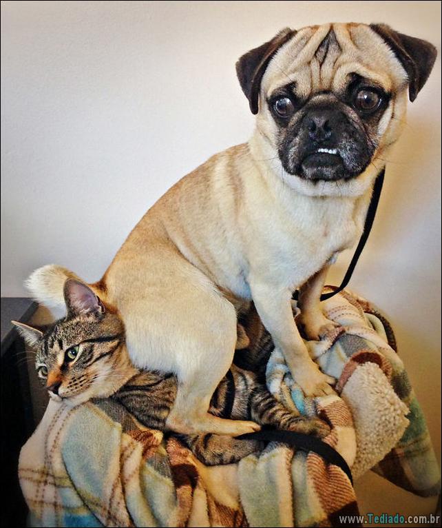 cachorros-que-nao-liga-para-seu-espaco-34