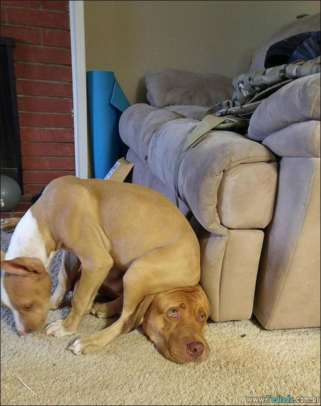 cachorros-que-nao-liga-para-seu-espaco-36