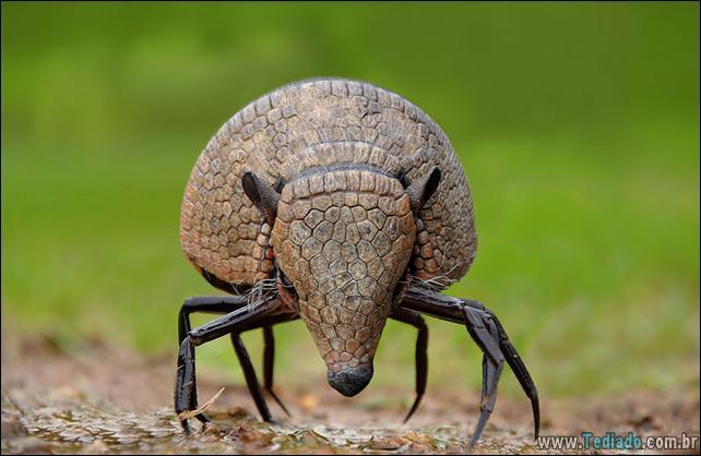 estranho-animais-hibrido-21