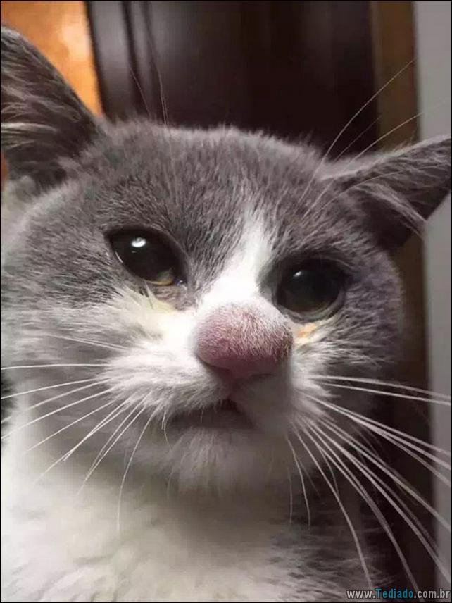 gatos-abelhas-vespas-10