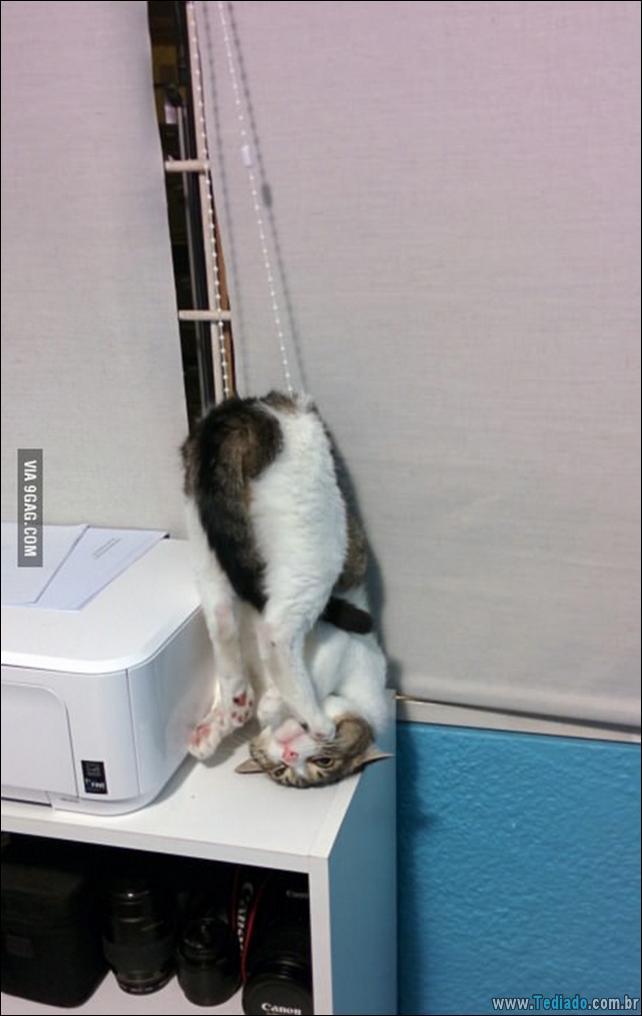 gatos-que-imediatamente-lamentou-suas-escolhas-01