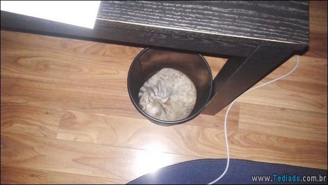 gatos-que-imediatamente-lamentou-suas-escolhas-02