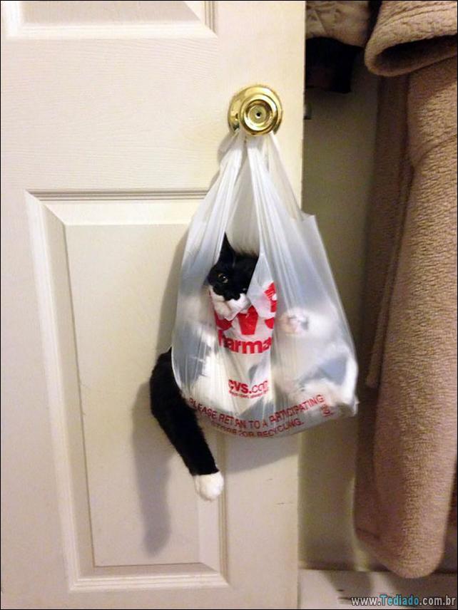 gatos-que-imediatamente-lamentou-suas-escolhas-03