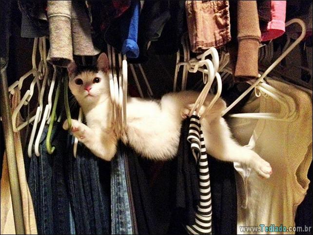 gatos-que-imediatamente-lamentou-suas-escolhas-05