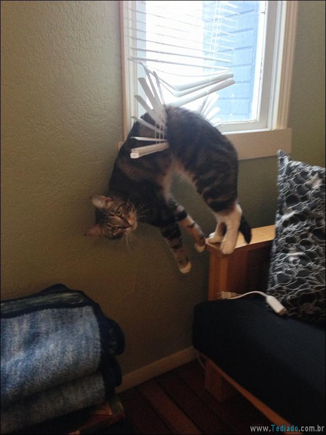 gatos-que-imediatamente-lamentou-suas-escolhas-06