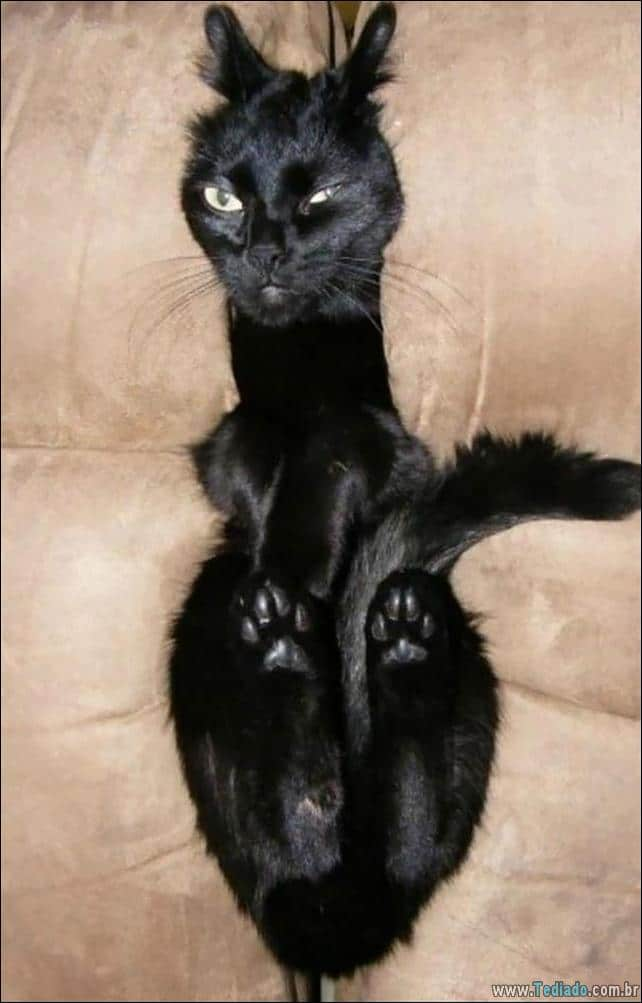 gatos-que-imediatamente-lamentou-suas-escolhas-08