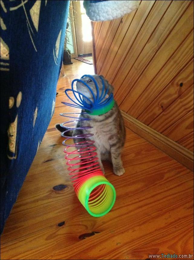 gatos-que-imediatamente-lamentou-suas-escolhas-09
