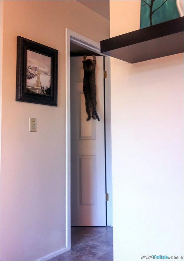gatos-que-imediatamente-lamentou-suas-escolhas-11