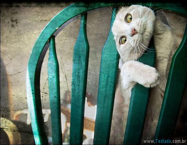 gatos-que-imediatamente-lamentou-suas-escolhas-13