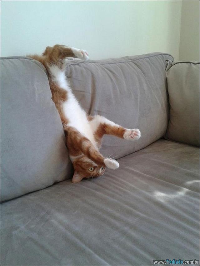 gatos-que-imediatamente-lamentou-suas-escolhas-14