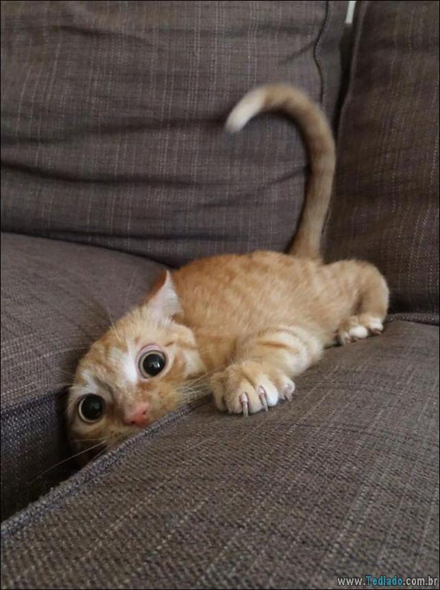 gatos-que-imediatamente-lamentou-suas-escolhas-16