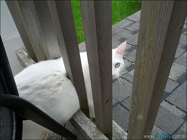 gatos-que-imediatamente-lamentou-suas-escolhas-17