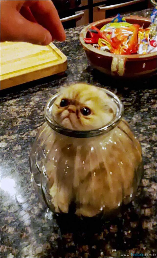 gatos-que-imediatamente-lamentou-suas-escolhas-18