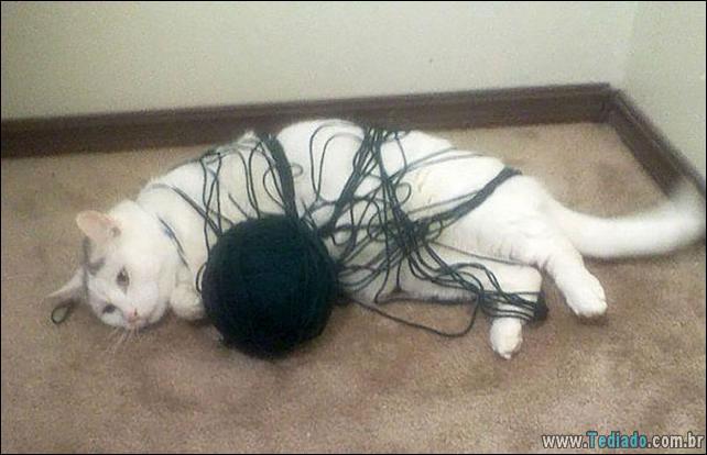 gatos-que-imediatamente-lamentou-suas-escolhas-19