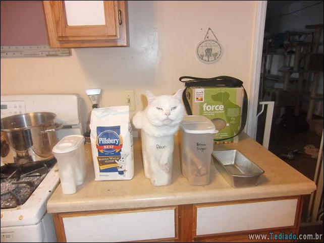 gatos-que-imediatamente-lamentou-suas-escolhas-21