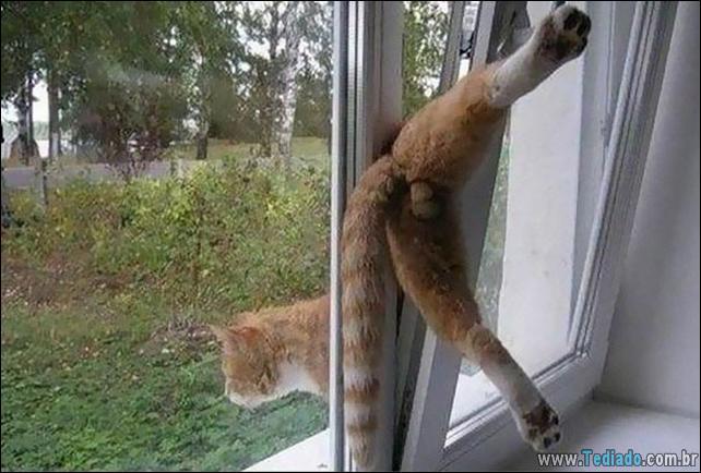gatos-que-imediatamente-lamentou-suas-escolhas-22