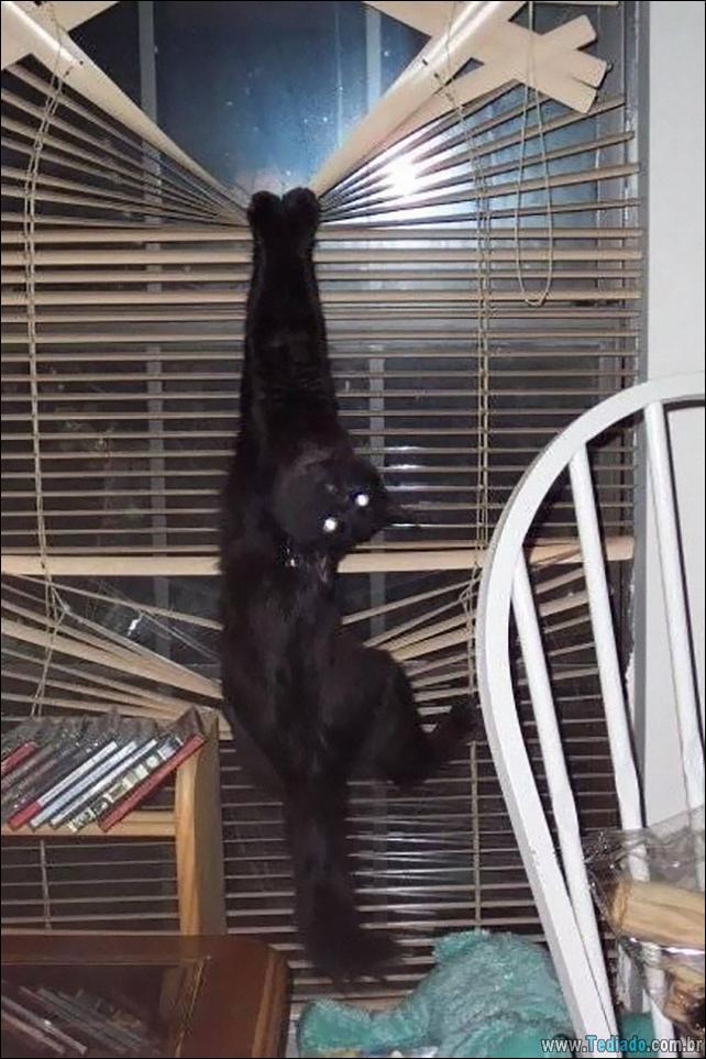gatos-que-imediatamente-lamentou-suas-escolhas-26