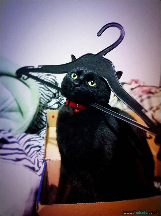 gatos-que-imediatamente-lamentou-suas-escolhas-27