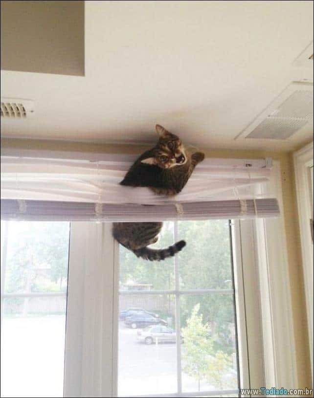 gatos-que-imediatamente-lamentou-suas-escolhas-29