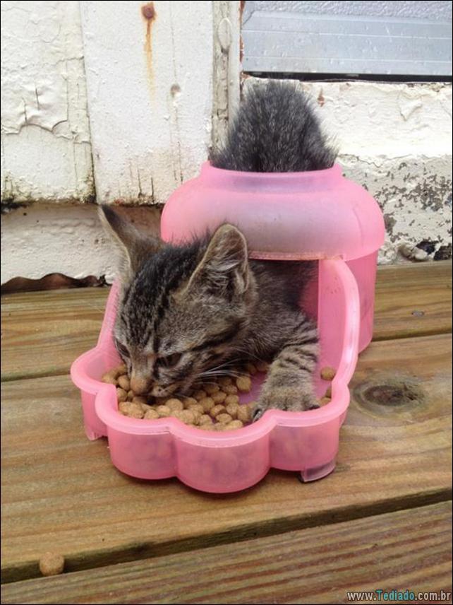 gatos-que-imediatamente-lamentou-suas-escolhas-32