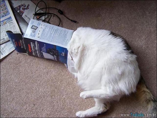 gatos-que-imediatamente-lamentou-suas-escolhas-33