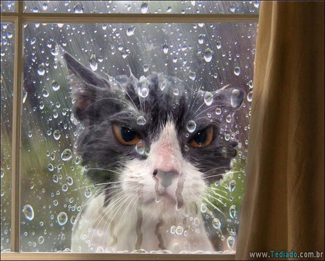 gatos-que-imediatamente-lamentou-suas-escolhas-34