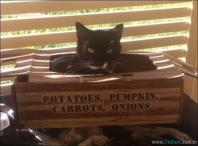 gatos-que-imediatamente-lamentou-suas-escolhas-37