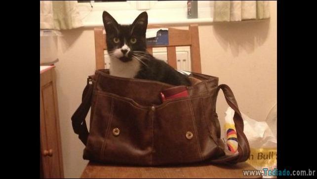 gatos-que-imediatamente-lamentou-suas-escolhas-38