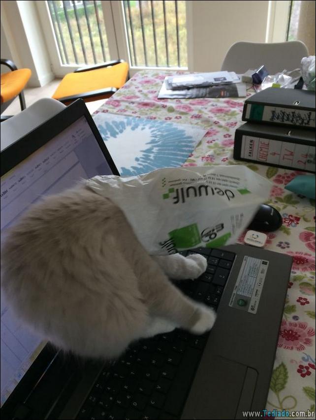 gatos-que-imediatamente-lamentou-suas-escolhas-39