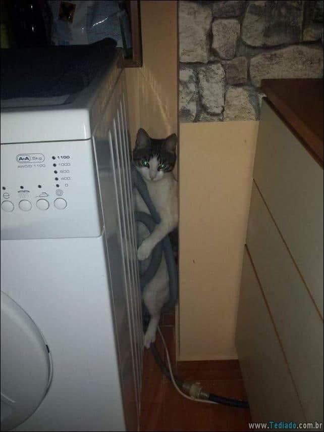 gatos-que-imediatamente-lamentou-suas-escolhas-40