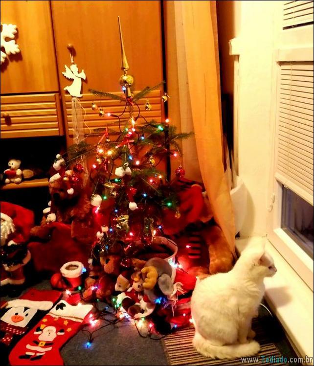 gatos-ajudando-a-decorar-arvore-de-natal-01