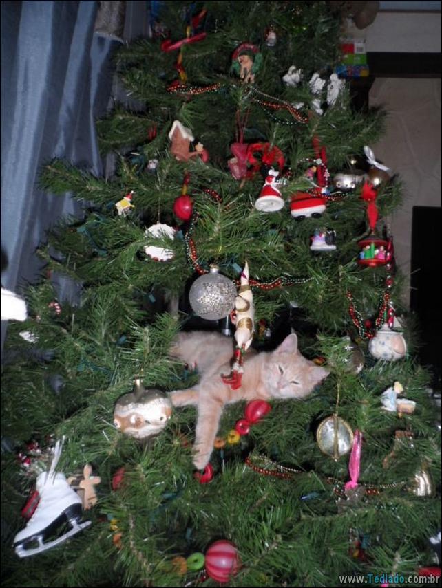 gatos-ajudando-a-decorar-arvore-de-natal-02