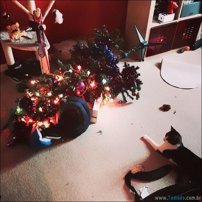gatos-ajudando-a-decorar-arvore-de-natal-04