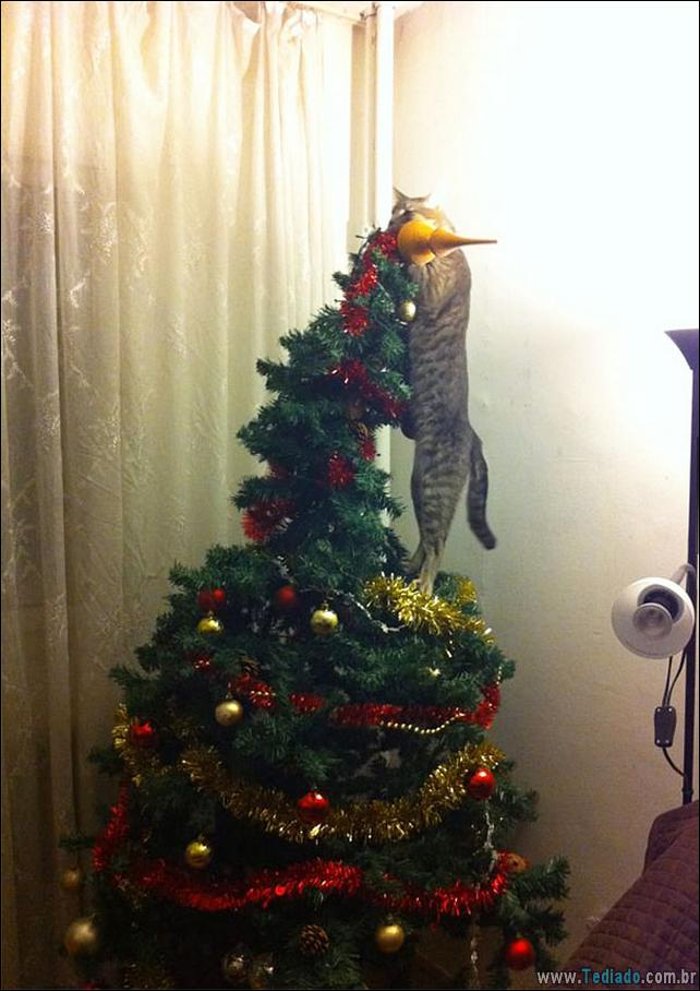 gatos-ajudando-a-decorar-arvore-de-natal-05
