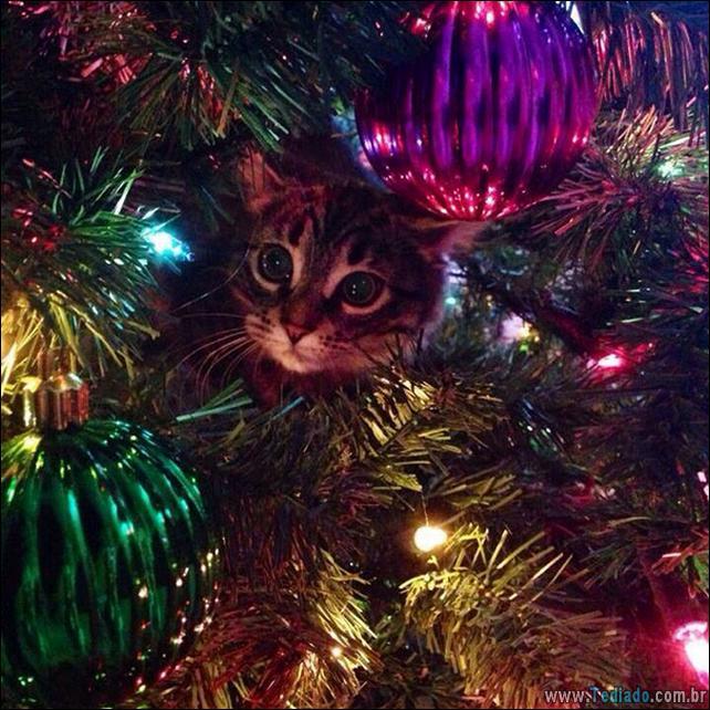 gatos-ajudando-a-decorar-arvore-de-natal-06