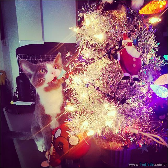 gatos-ajudando-a-decorar-arvore-de-natal-07