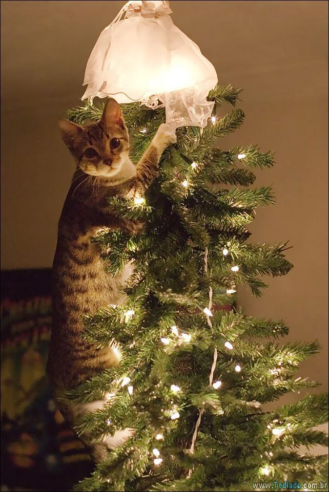 gatos-ajudando-a-decorar-arvore-de-natal-08