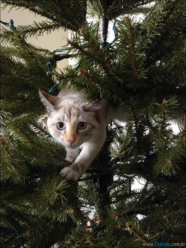 gatos-ajudando-a-decorar-arvore-de-natal-09
